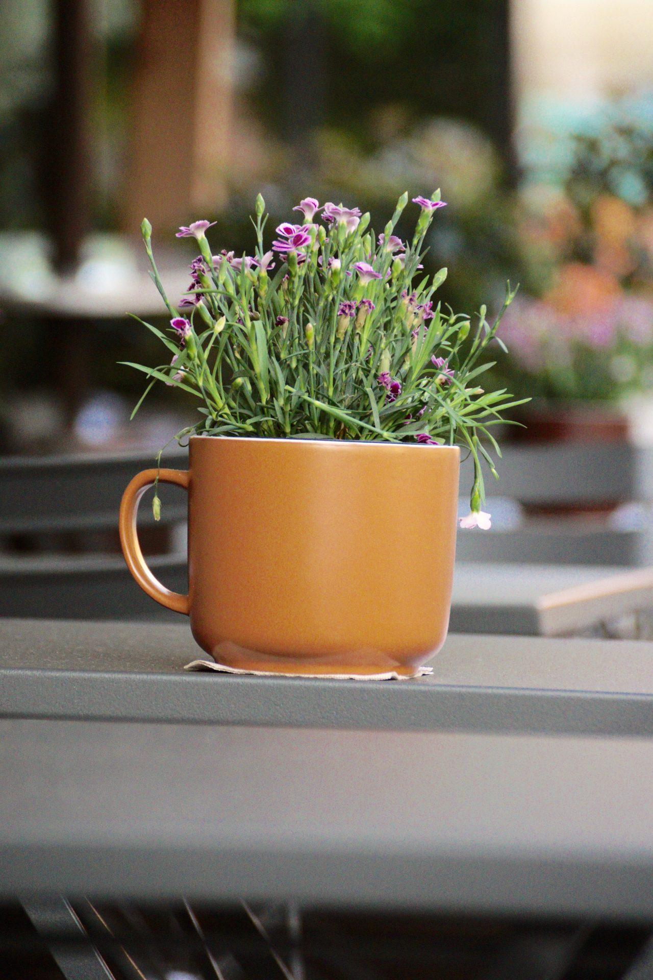 Brera Milano Kaffe Design