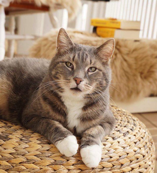 Katt som høstpynt