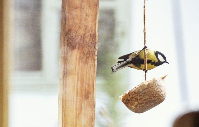 Lage fuglemat