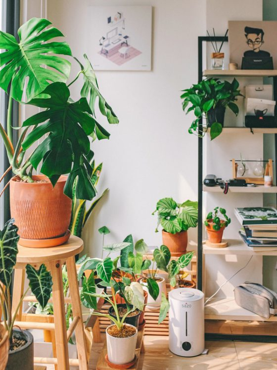 Terracotta og planter