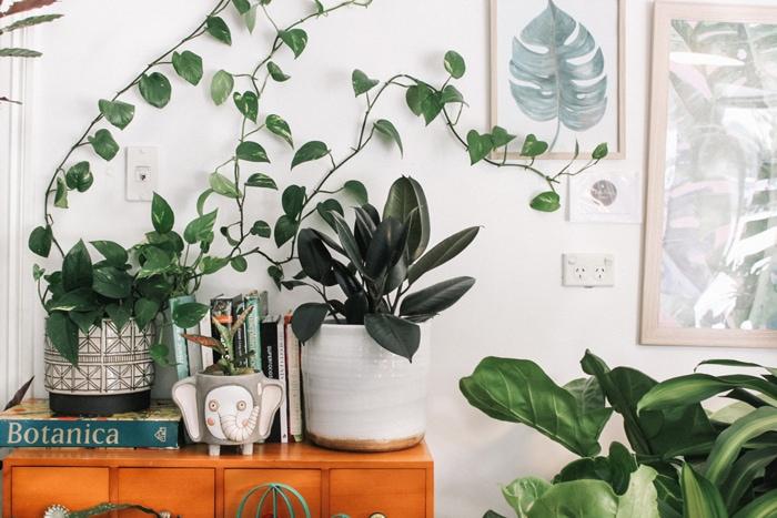 Urban jungle planter på en komode
