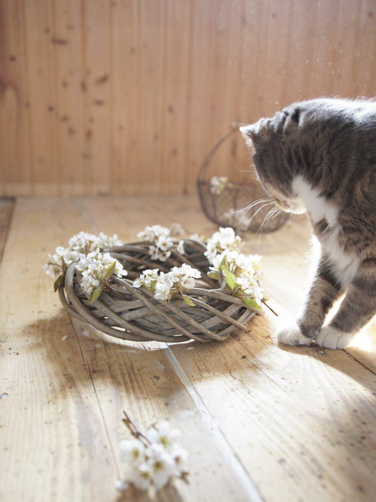 Katt og blomsterkrans på gulvbelegget