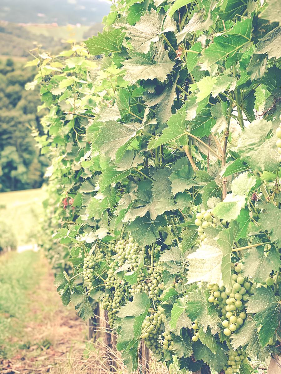 Vinranker i Slovenia orange vin